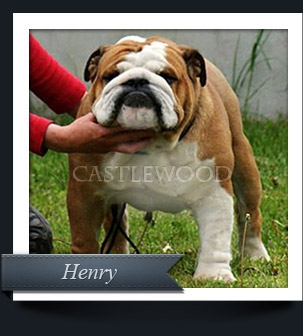 This is s photo of Castlwood Bulldogs Champion Henry