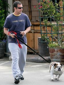 bulldog_with_adam_sandler