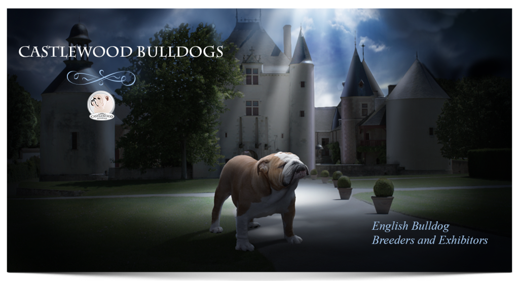 This is banner image for Castlewood English bulldog breeders and logo with a photo of a dog and a castle