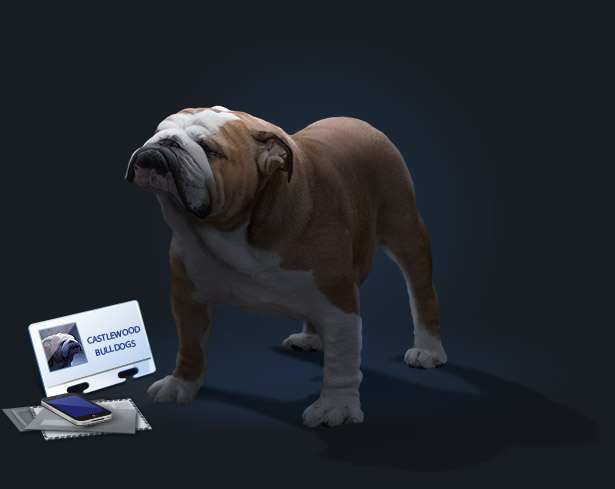 This is a banner photo of missouri-english-bulldog-breeders-contact