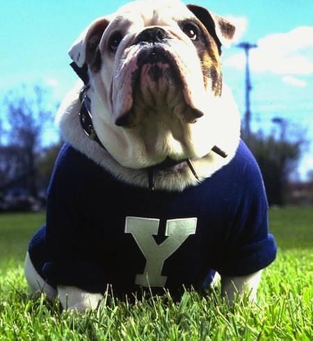 Yale Bulldog Mascot